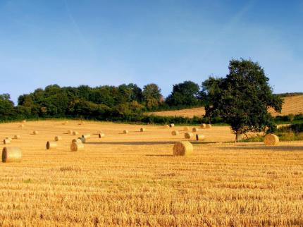campo agricolo, agricoltura, campagna, aziende agricole, sviluppo rurale