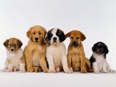 Cani, animali da compagnia