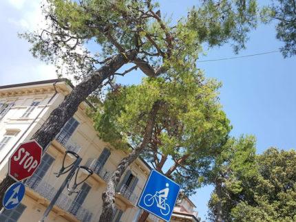 Alberi messi in sicurezza a Porto San Giorgio