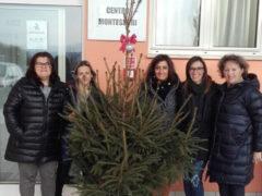 Alberi di Natale donati da Fermo Asite a Centro Montessori