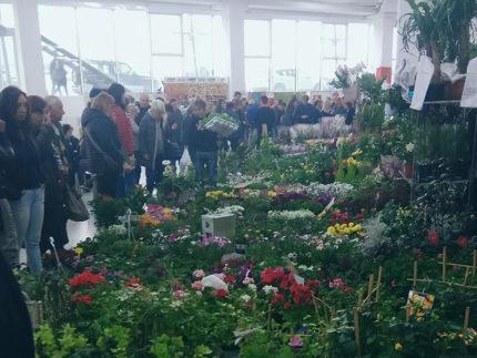 Verde - Mostra Mercato Orti e Giardini a Fermo