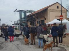 Pasquella di S. Antonio Abate a Porto Sant'Elpidio: benedizione degli animali